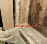 Bausachverständiger-Kassel Hauskaufberatung Holzschädlinge